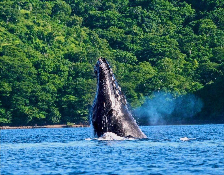 Costa Rica Pure Nature 7