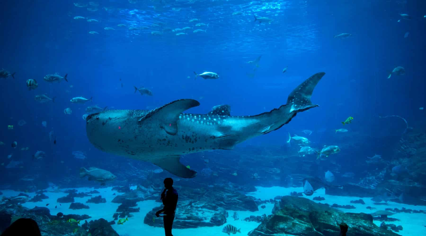 Antalya Aquarium – One of the World's Biggest Aquariums