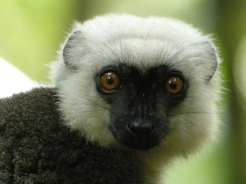Masoala National Park in Madagascar - Tips & Guide 3