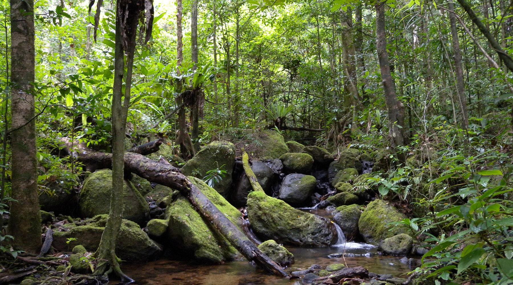 Masoala National Park in Madagascar – Tips & Guide