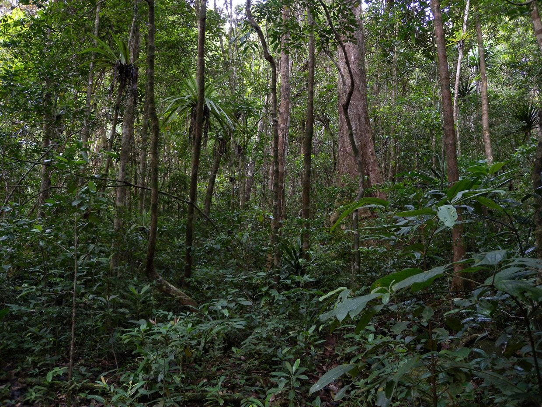 Masoala National Park in Madagascar - Tips & Guide 1