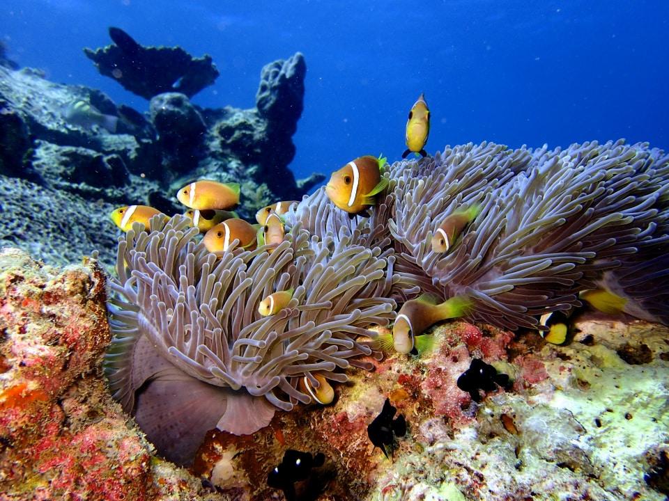 Kagi Maldives Spa Island (All-Inclusive 2021) 9
