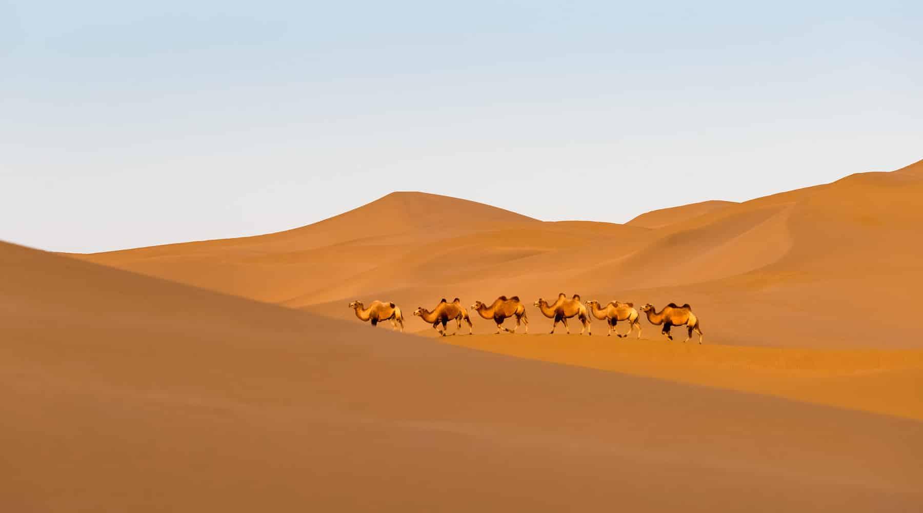 Erg Chebbi, Merzouga, Morocco – All Information You Need