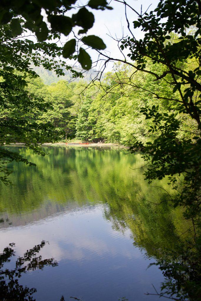 Biogradska Gora National Park, Montenegro - Full Guide 2