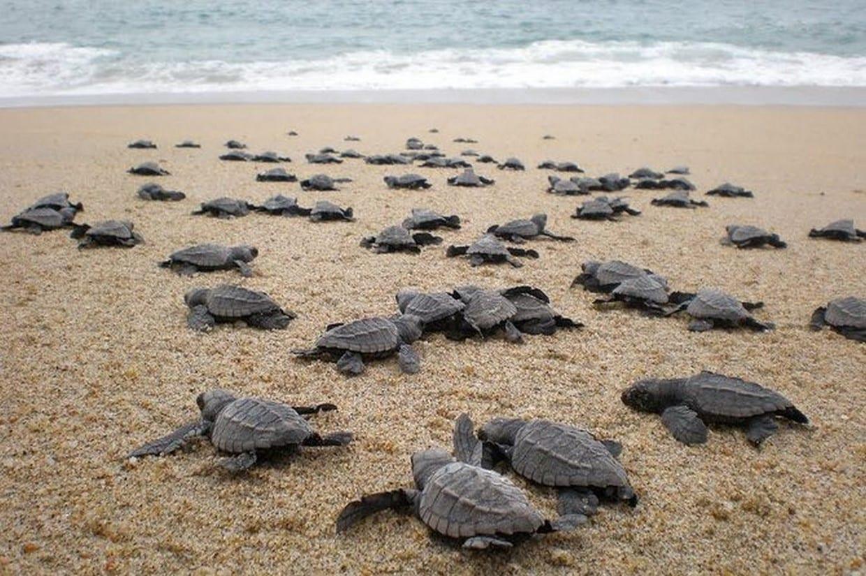 Tortuguero National Park 8