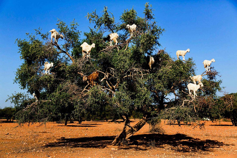 8 Day to Essaouira Via Atlantic Coast 3