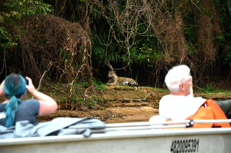 Brazil Northern Pantanal and Jaguar Spotting 5