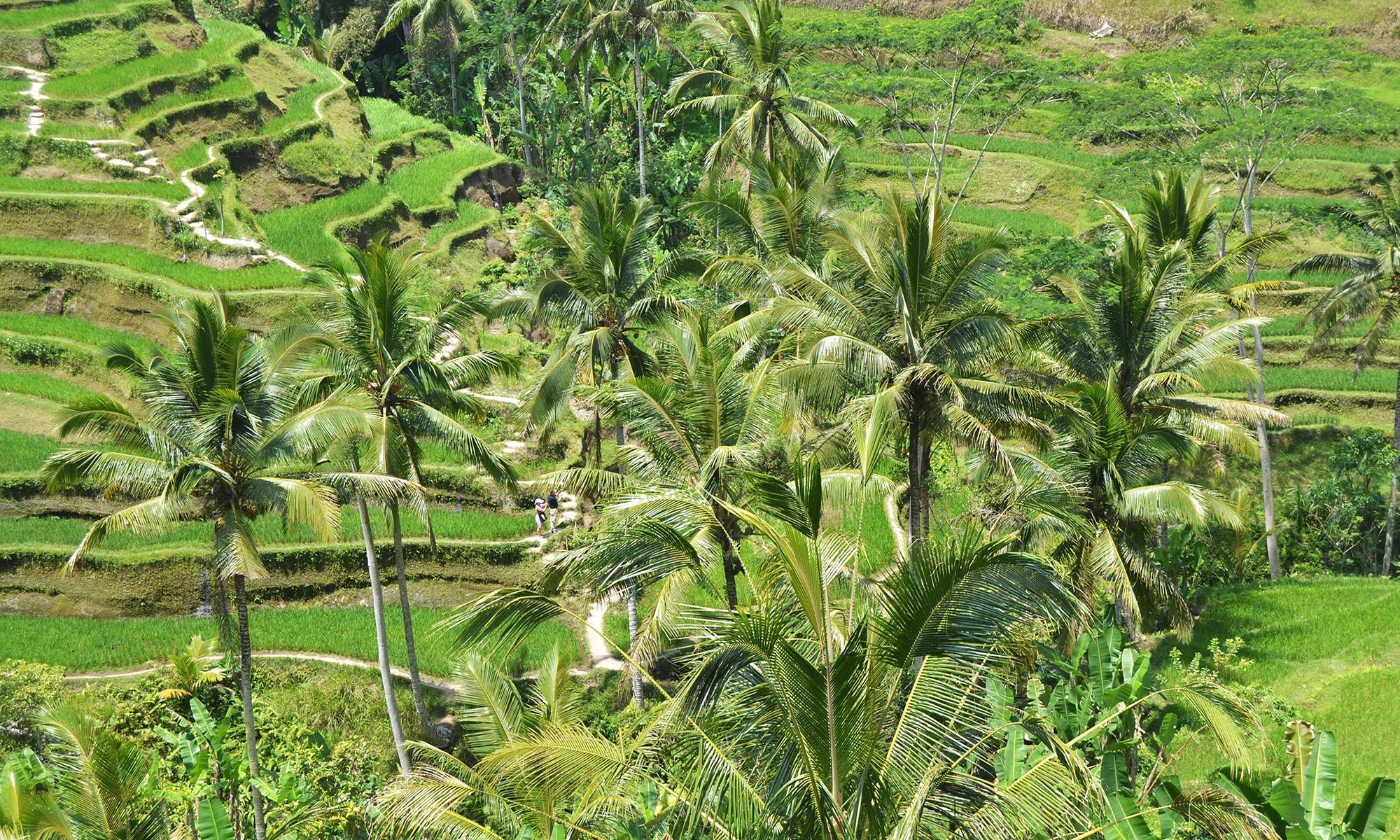 4 Days Bali Private Tour Package 5