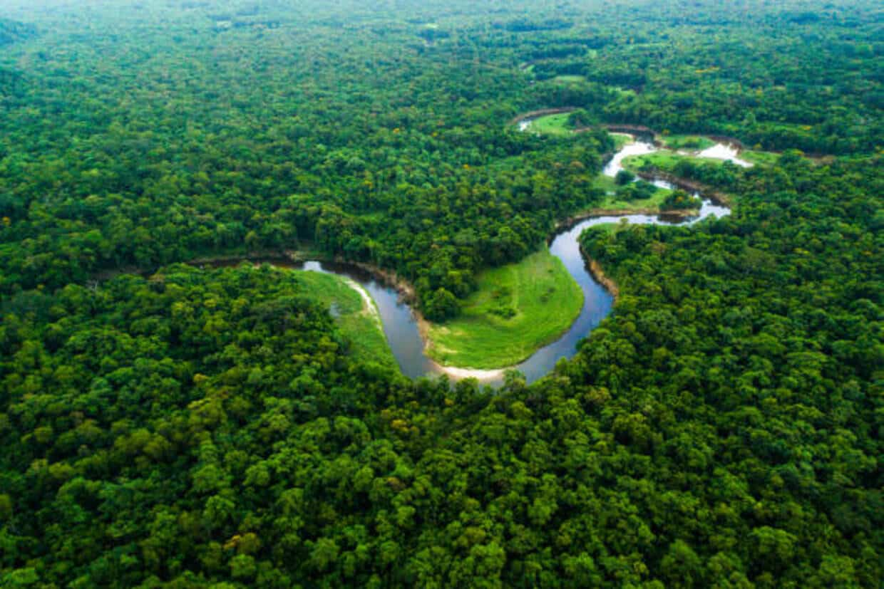 Cruise in the Heart of the Amazon Rainforest 1