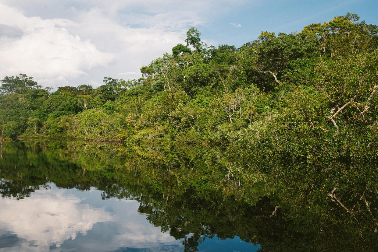 Cruise in the Heart of the Amazon Rainforest 5