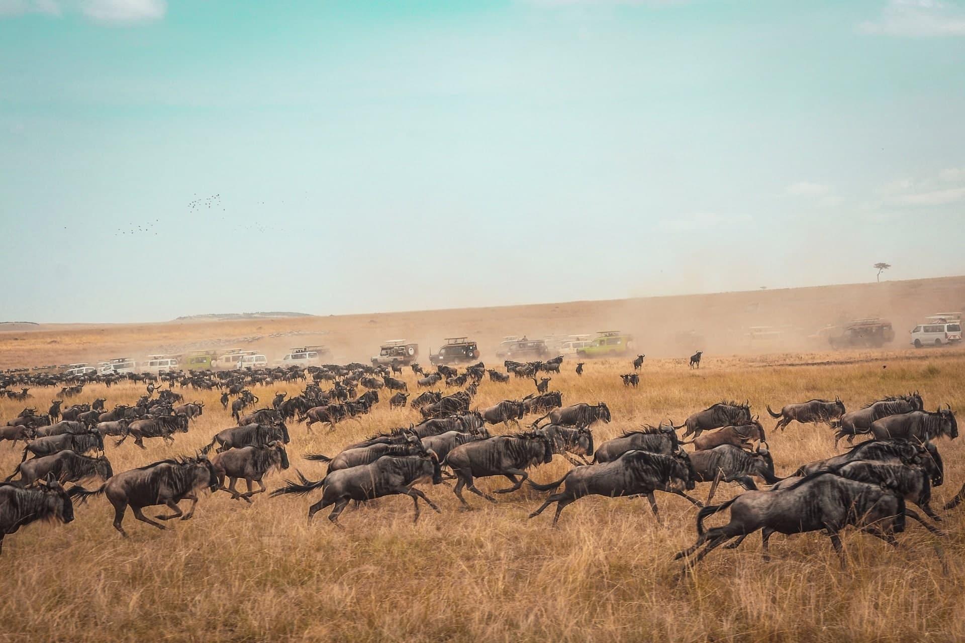 3 Days Private Midrange Safari Tour 4