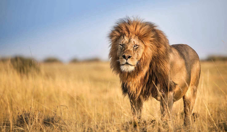 4 Days Masai Mara and Lake Nakuru Safari 2