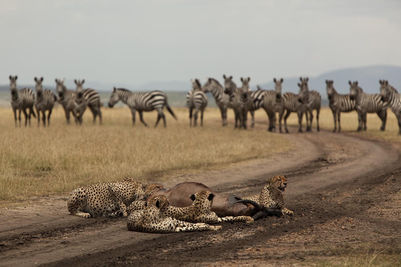 3 Days Private Midrange Safari Tour 2