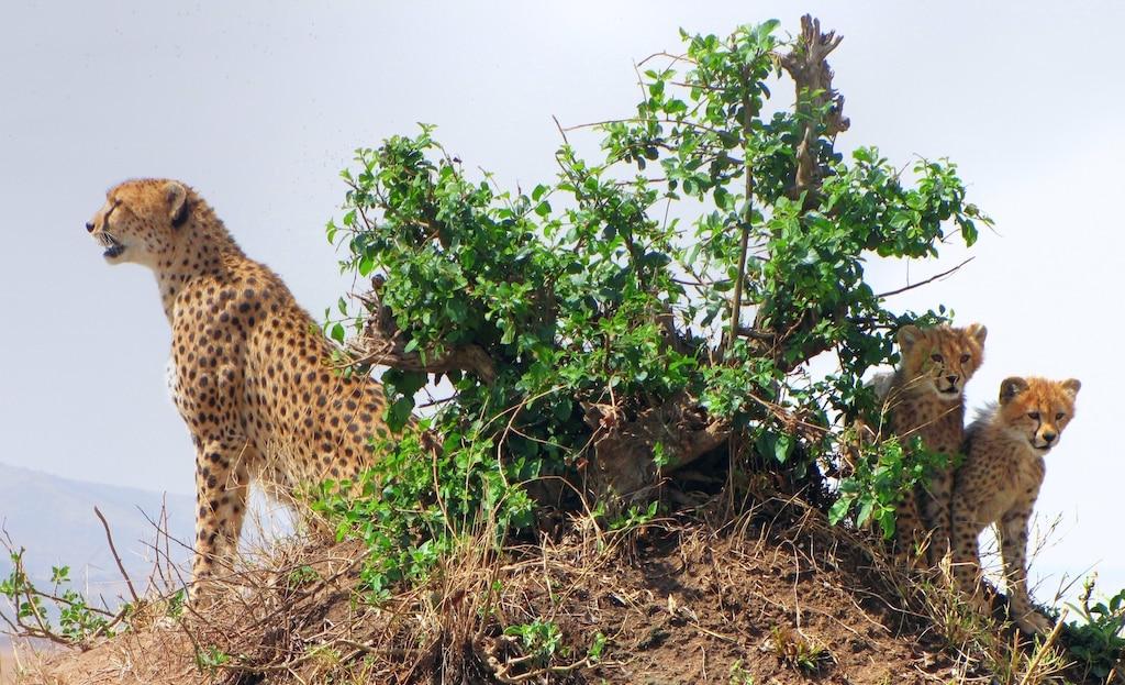 4 Days Masai Mara and Lake Nakuru Safari 1
