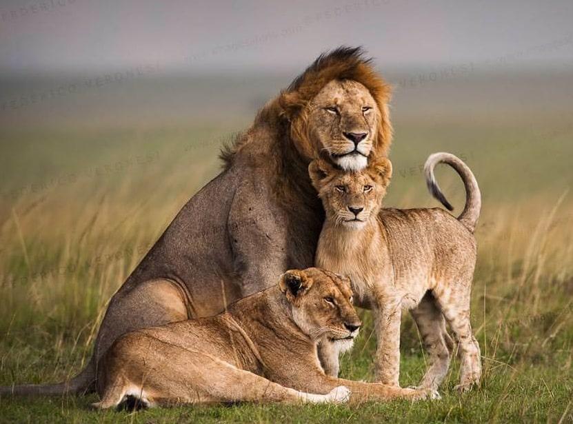 3 Days Private Midrange Safari Tour 3