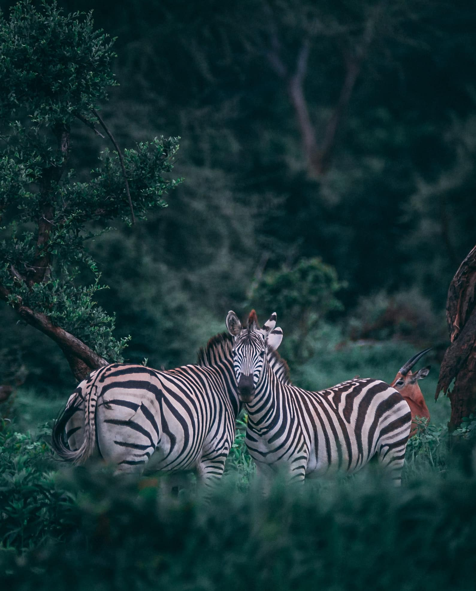 4 Days Masai Mara and Lake Nakuru Safari 4
