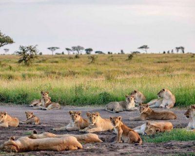 Tanzania Travel Guide 5