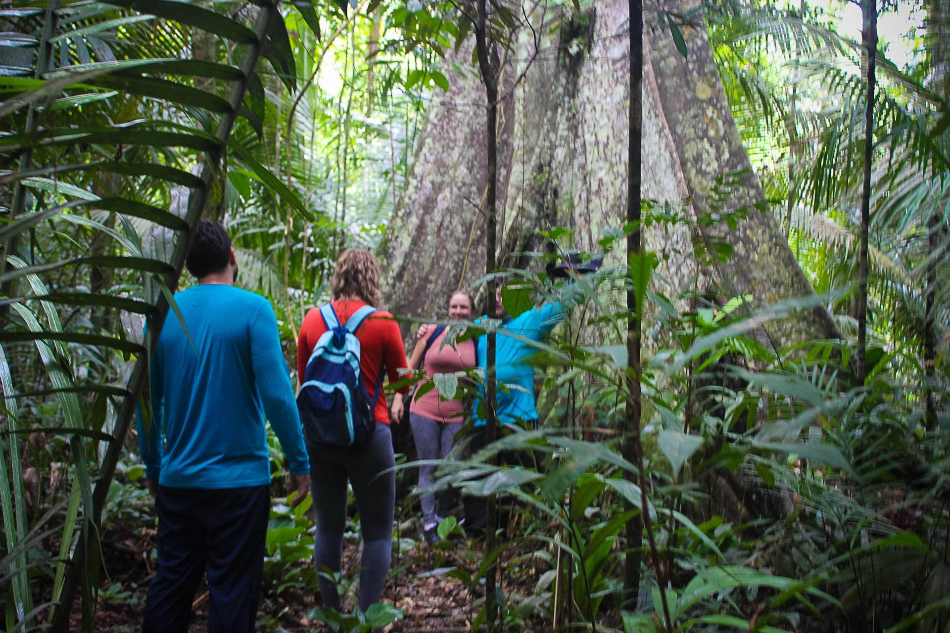 Amazon Rainforest Adventure 4