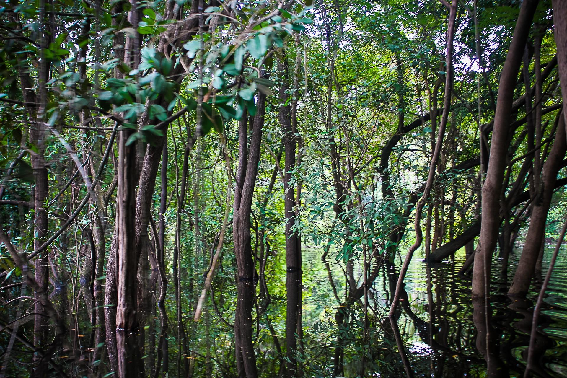 Amazon Black Caiman 5