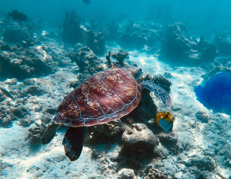Maldives Tour - North ARI Local Island Hopping 3