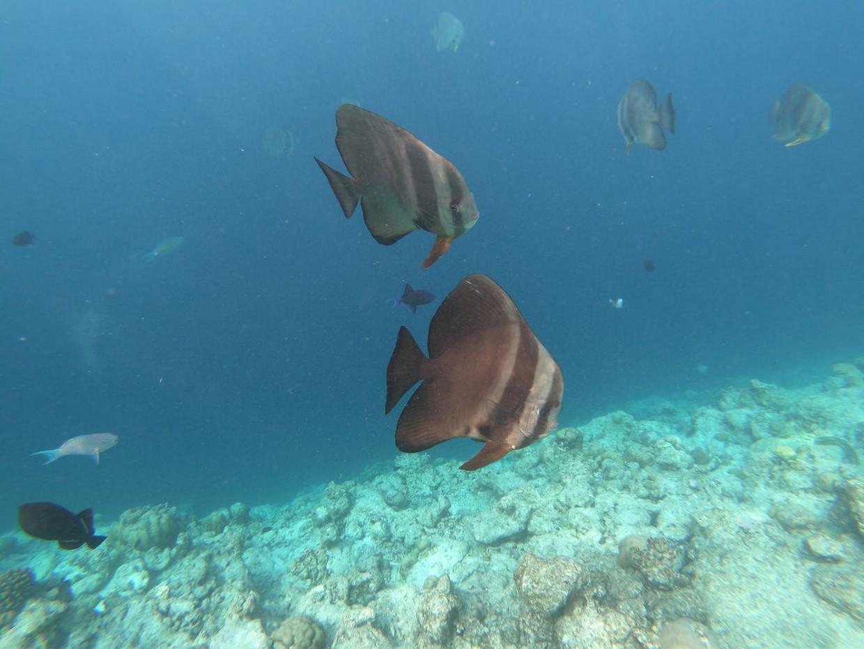 Maldives Tour - North ARI Local Island Hopping 6