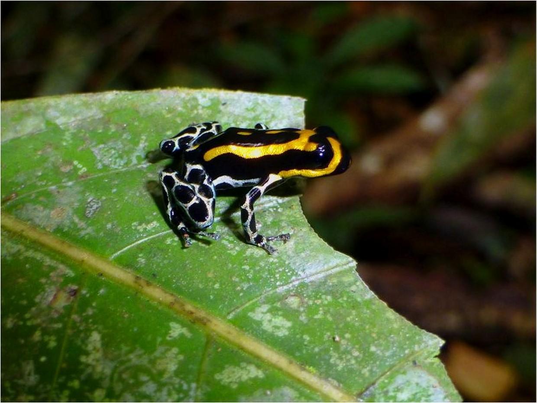 Exploring The Amazon Rainforest 4