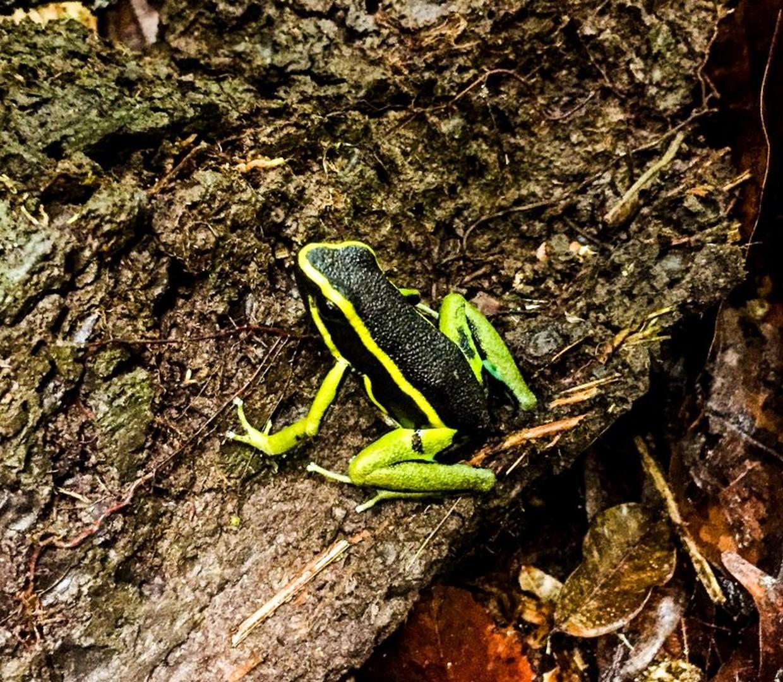 Amazon Rainforest Adventure 5