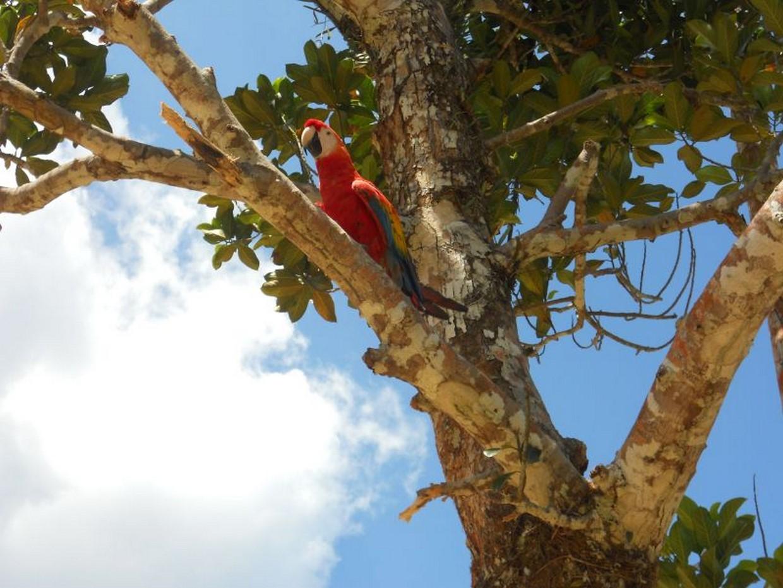 Into The Amazon Rainforest Tour 4