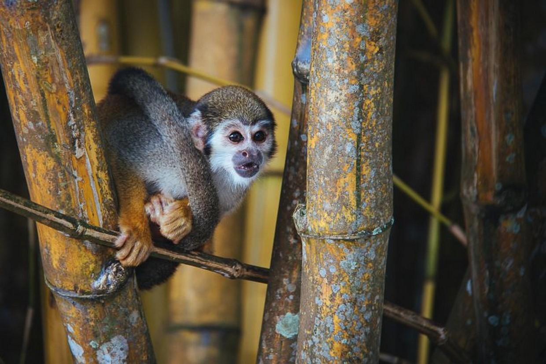 Exploring The Amazon Rainforest 1