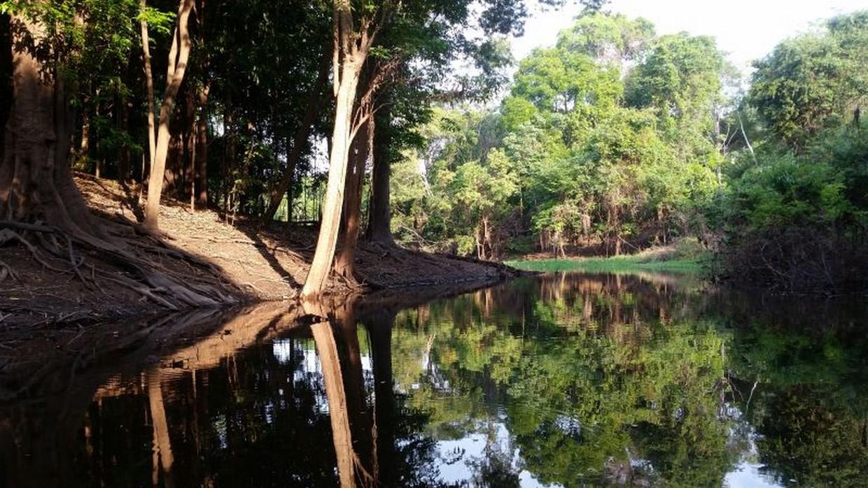 Into The Amazon Rainforest Tour 2