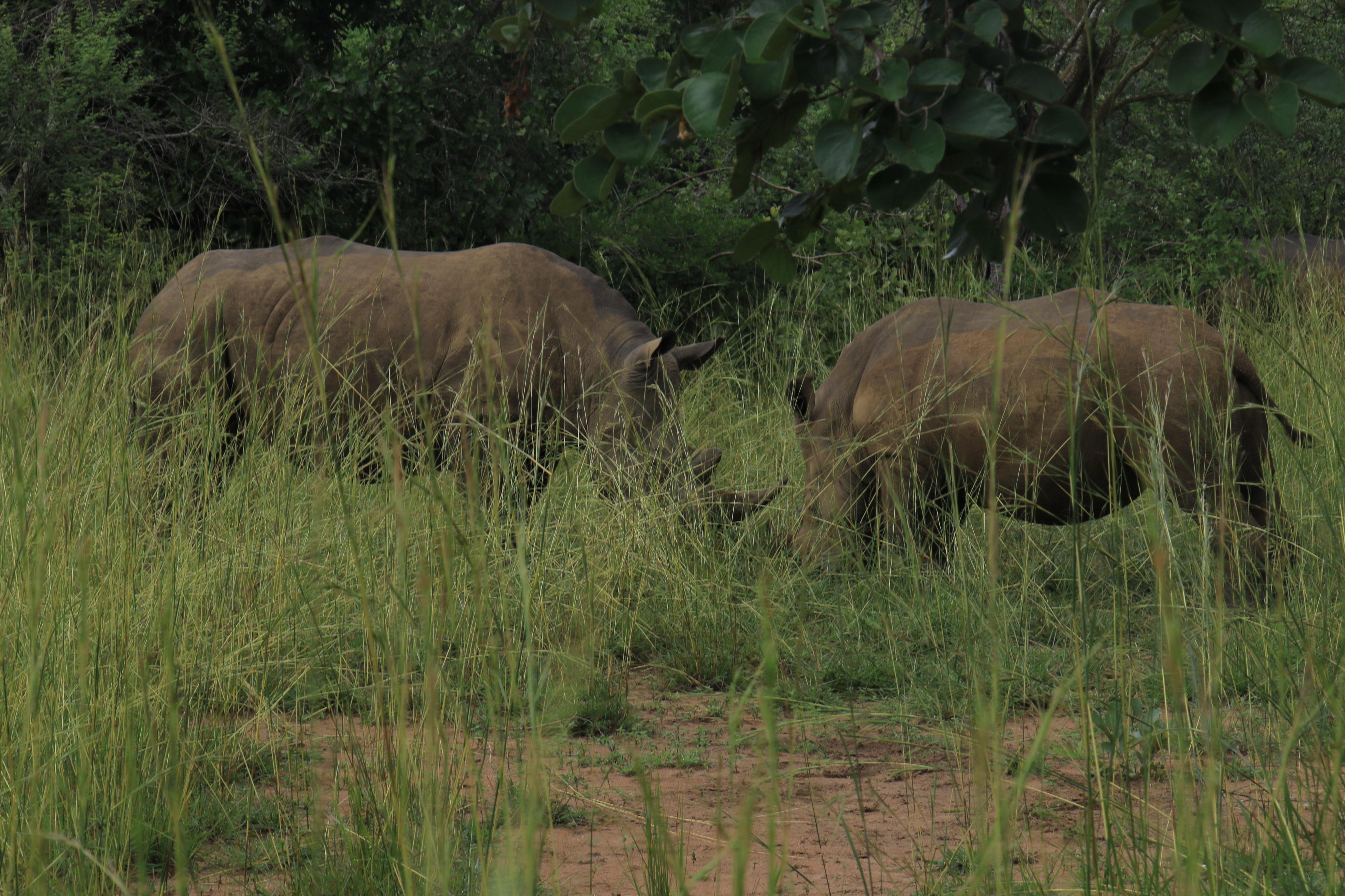 7 Days Uganda Safari Tour - Wildlife & Primates Adventure 4