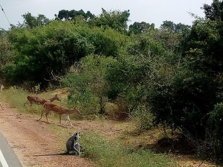 Sri Lanka Sightseeing Package   5 Days 4