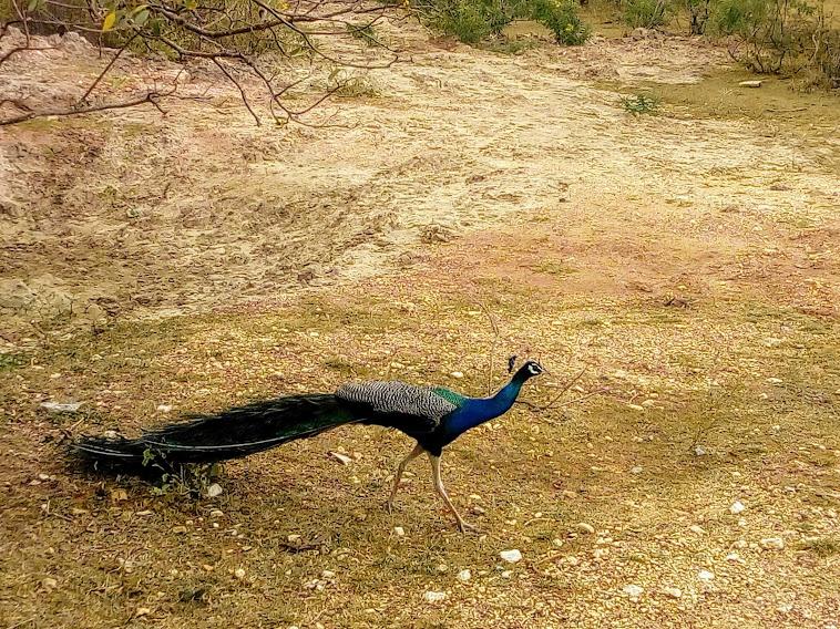 Sri Lanka Sightseeing Package   5 Days 5