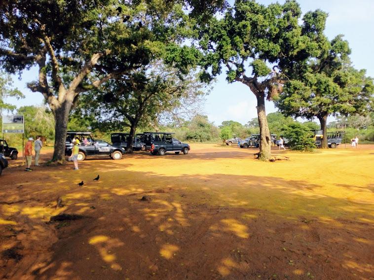 Sri Lanka Sightseeing Package   5 Days 6