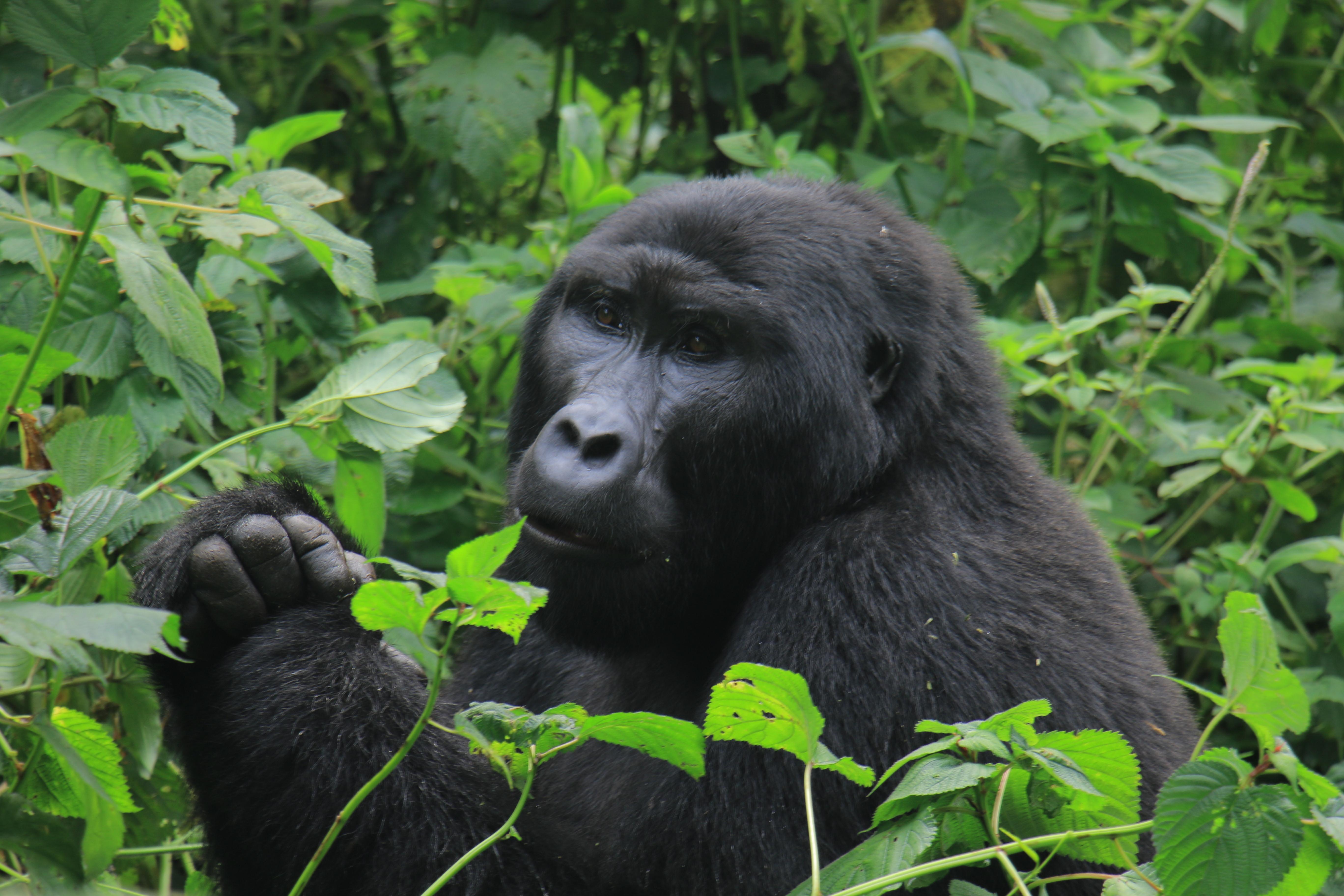 10 Days Road Trip to Encounter Gorillas & Wildlife in Uganda Tour 1