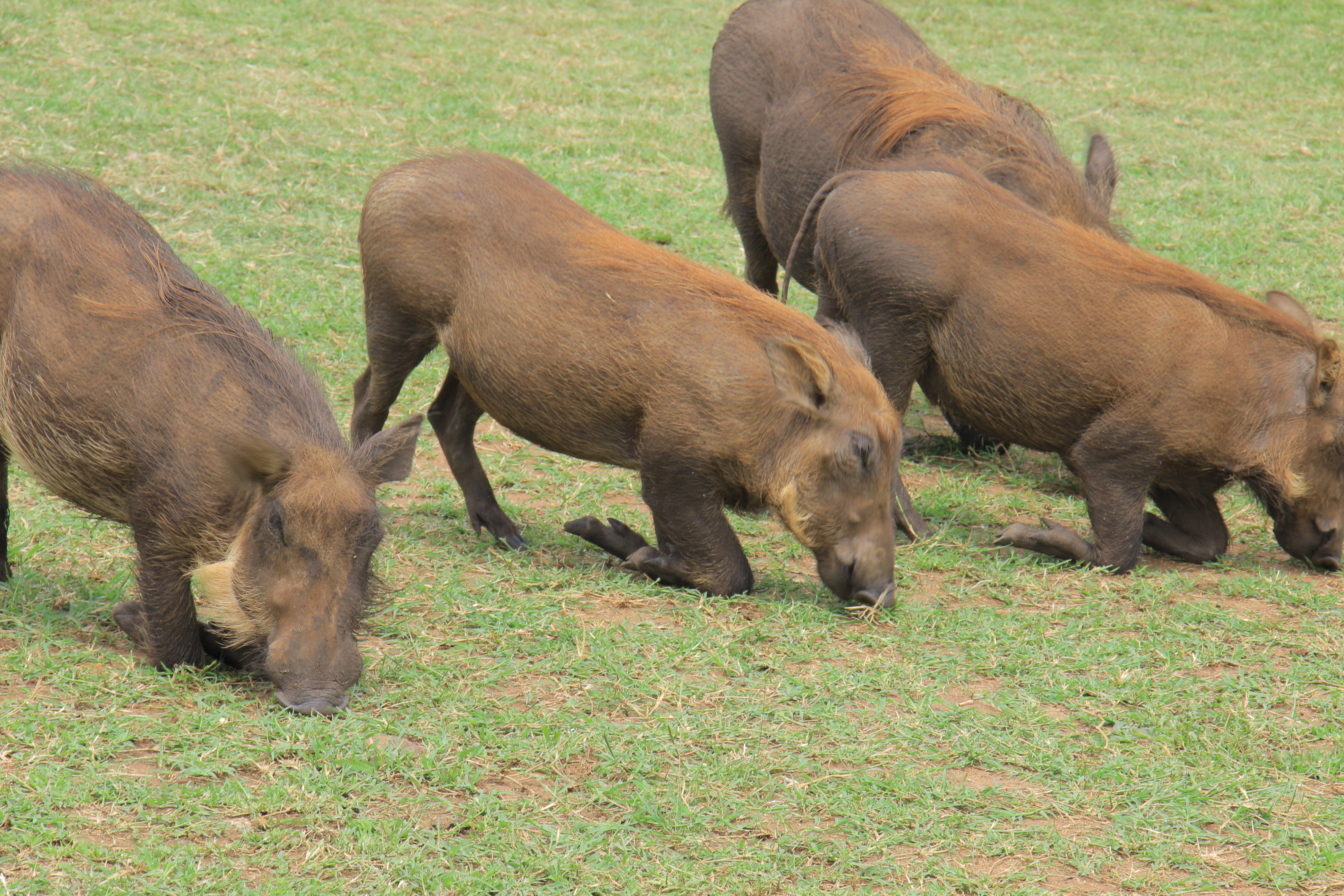 10 Days Road Trip to Encounter Gorillas & Wildlife in Uganda Tour 2