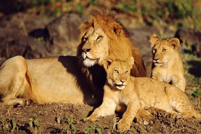 3 Days Private Midrange Safari Tour 6