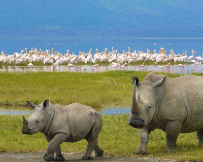 rhinos at nakuru national park