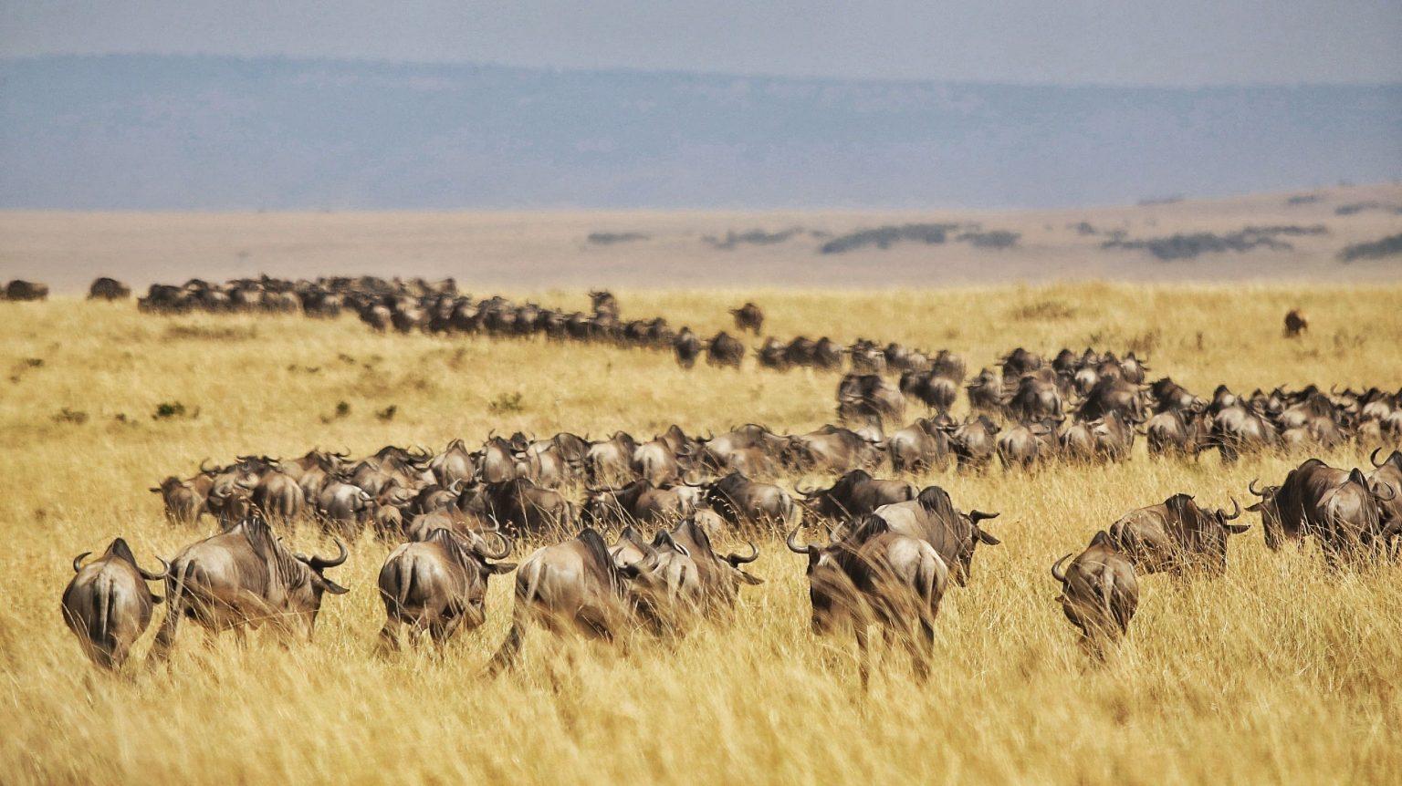 4 Days Masai Mara and Lake Nakuru Safari 6