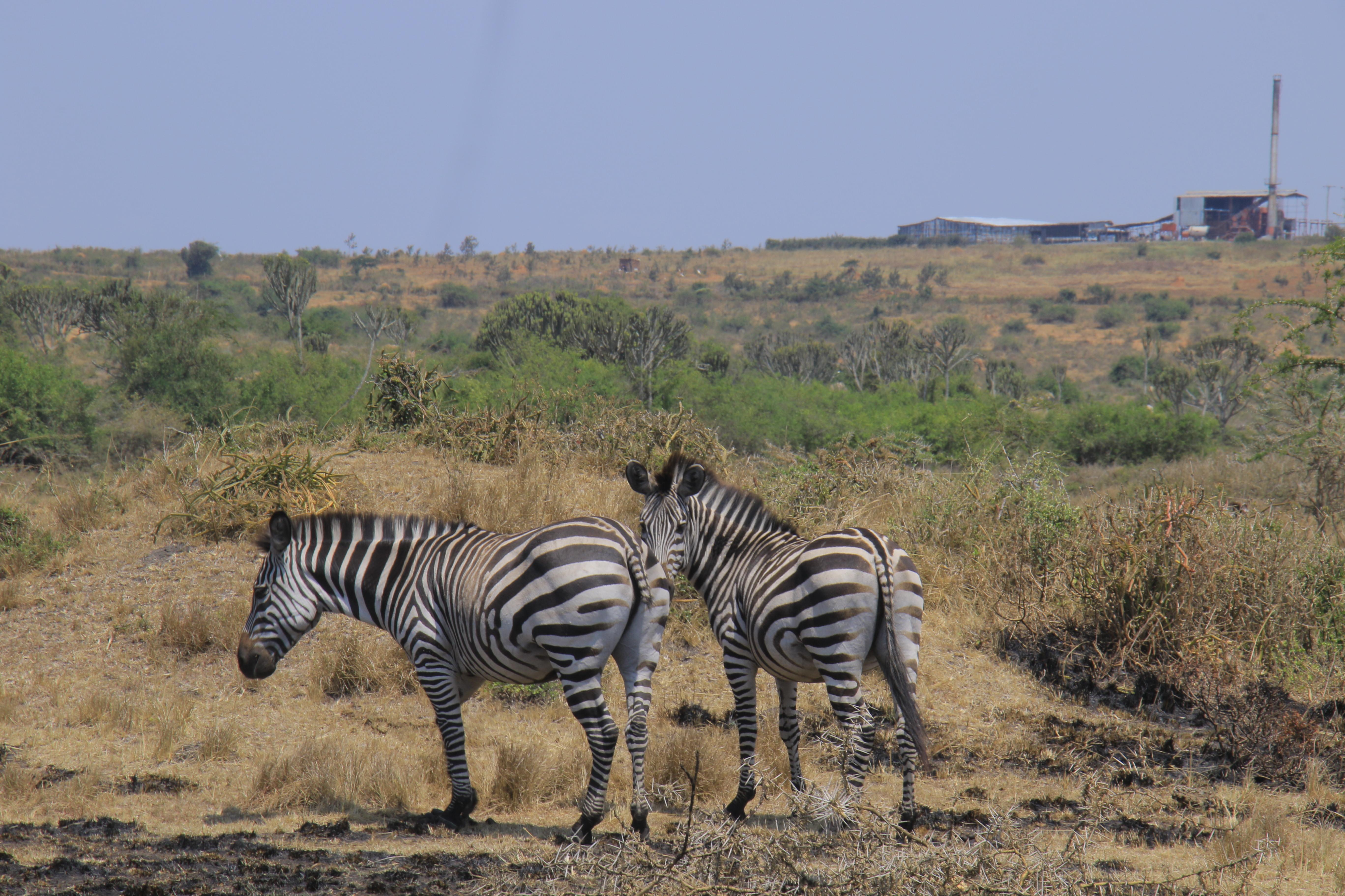10 Days Road Trip to Encounter Gorillas & Wildlife in Uganda Tour 5
