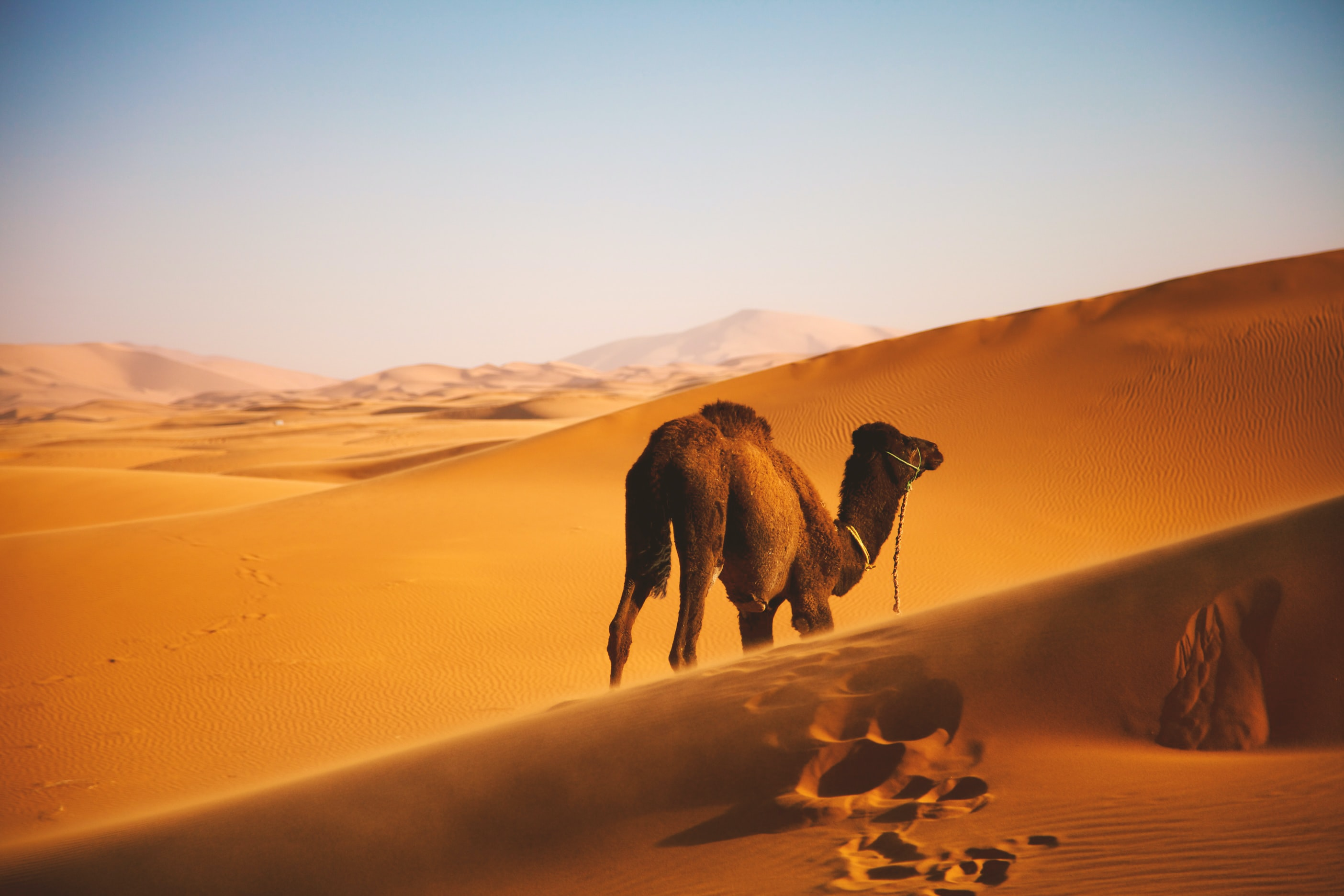 10-Days Morocco Tour from Casablanca Visiting Imperial Cities and Desert 2