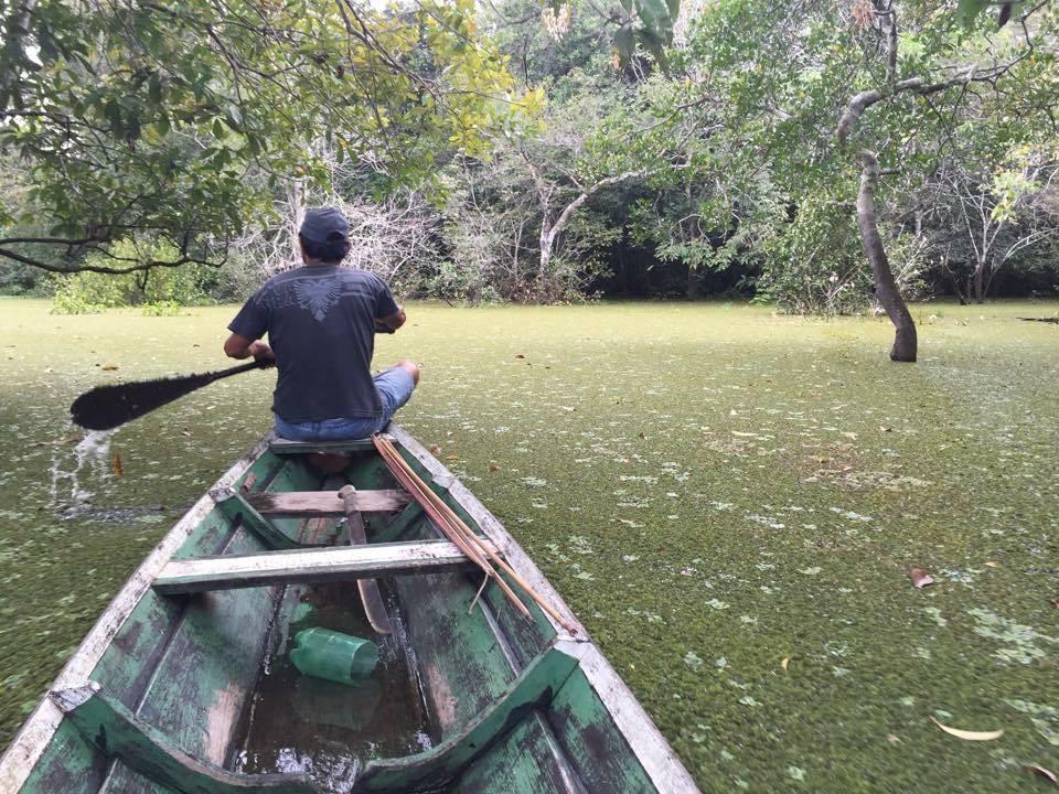 Amazon Red Piranha 1