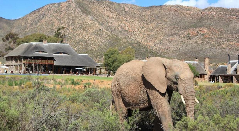 Cape Wine Tour & Safari | 7 Days 8