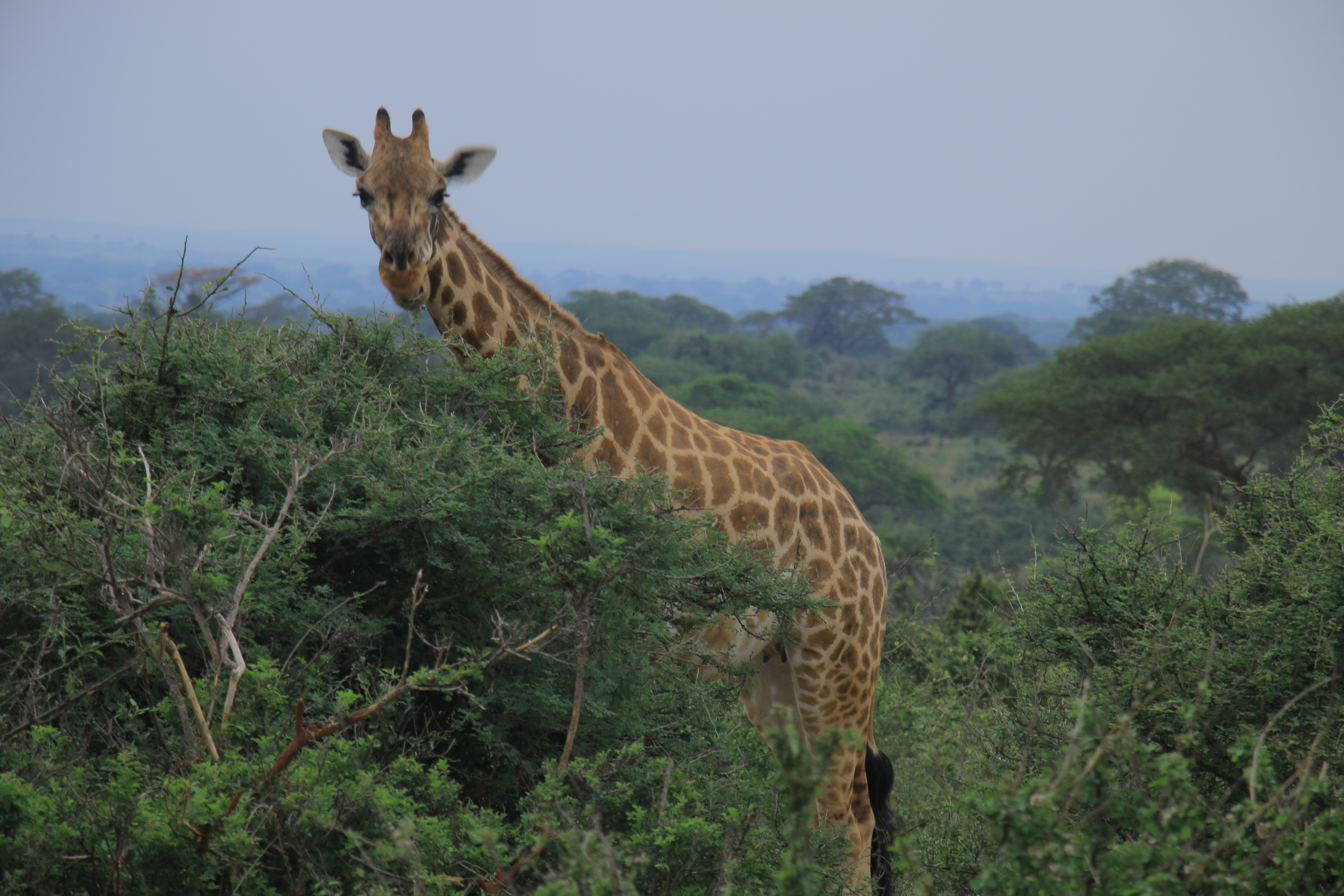 Uganda Primates, Wildlife & Kigali (Rwanda) City Tour 3
