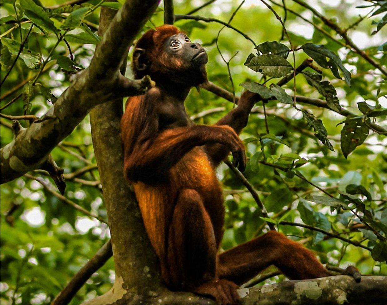 Amazon River - Isla De Los Monos Peru - 4 Days 2