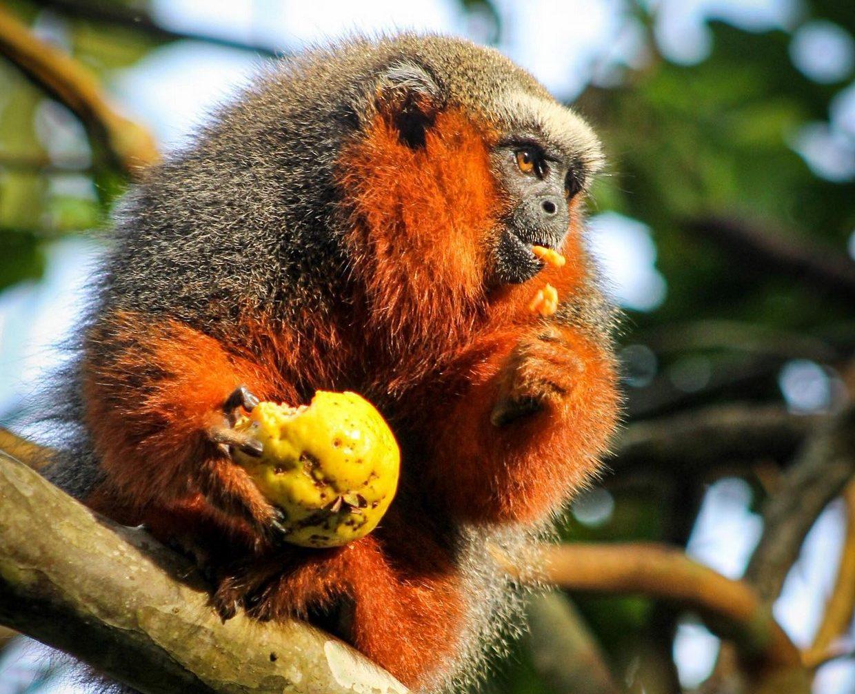 Amazon River - Isla De Los Monos Peru - 4 Days 3