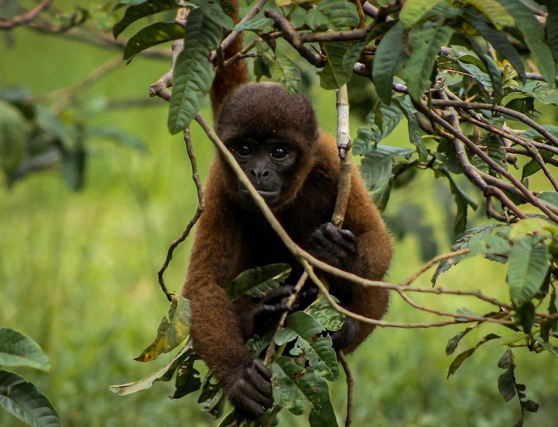 Amazon River - Isla De Los Monos Peru - 4 Days 4