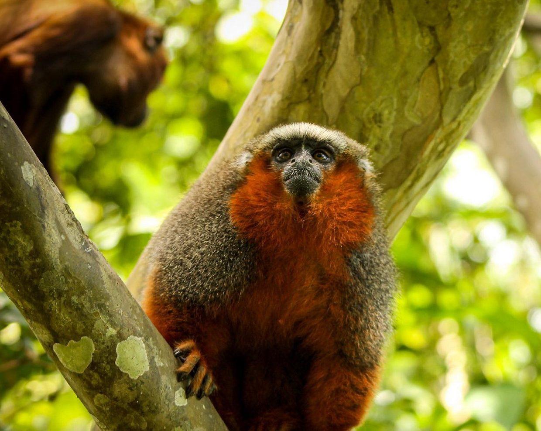 Amazon River - Isla De Los Monos Peru - 4 Days 5