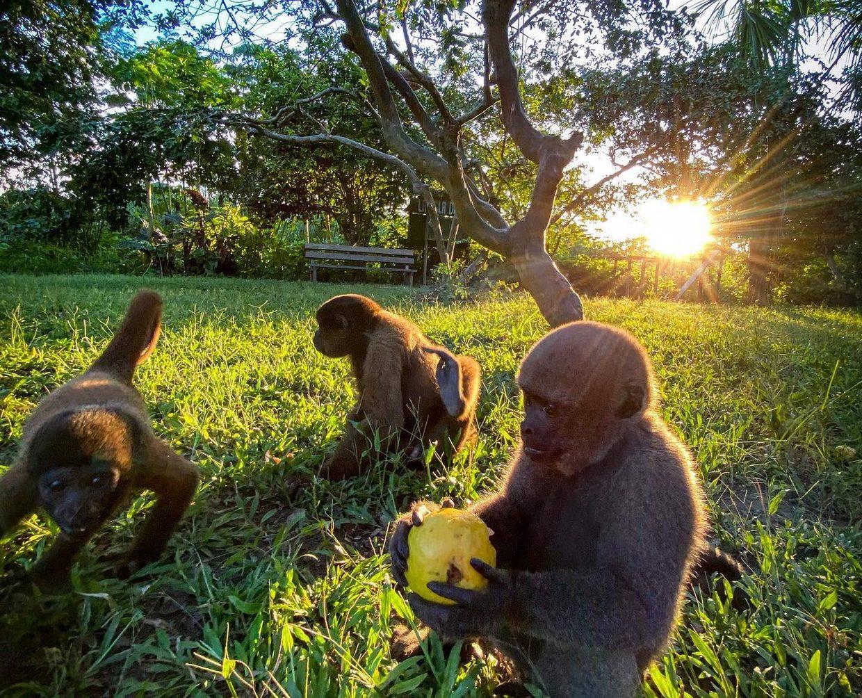 Yanayacu & Amazon River Tour - 4 Days 6