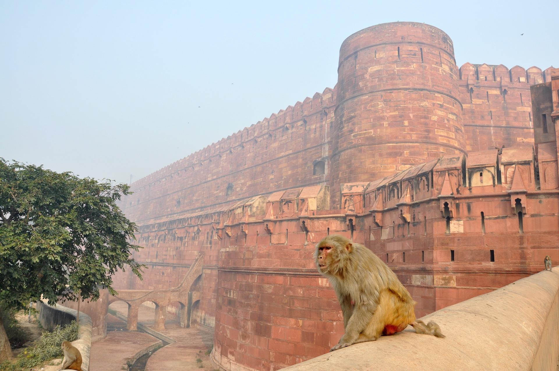 Rajasthan Wildlife Tour 8
